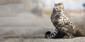 Top 10 Fastest Animals on Earth
