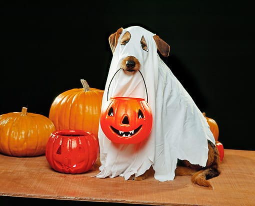 Ghost Halloween costume for dogs