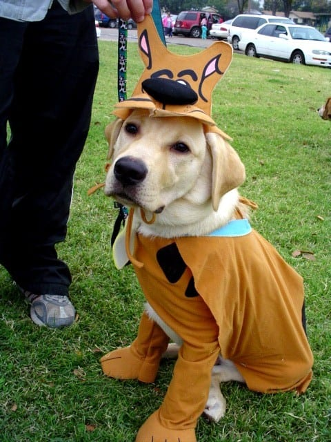 Scooby-Doo Halloween costume for dogs