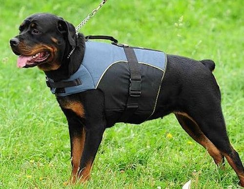 Most Dangerous Dogs In 2016 - Rottweiler