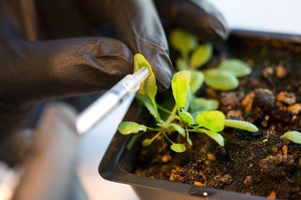 Supercharged Photosynthesis