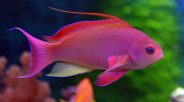 Most Beautiful Fishes -