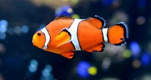 Top 10 Most Beautiful Fishes In The World