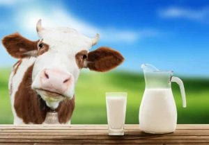 Top 10 Milk Producing Countries In The World 2017